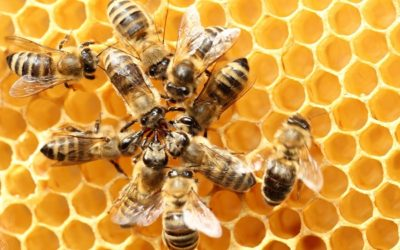 Otrzymaliśmy dotację na Warsztaty edukacyjne – Kochajmy pszczoły