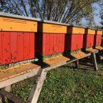 Odwiedziliśmy Gospodarstwo Pasieczne w Kiełczewie