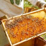 """Zapraszamy na bezpłatne """"Szkolenia dla początkujących i już praktykujących pszczelarzy"""""""
